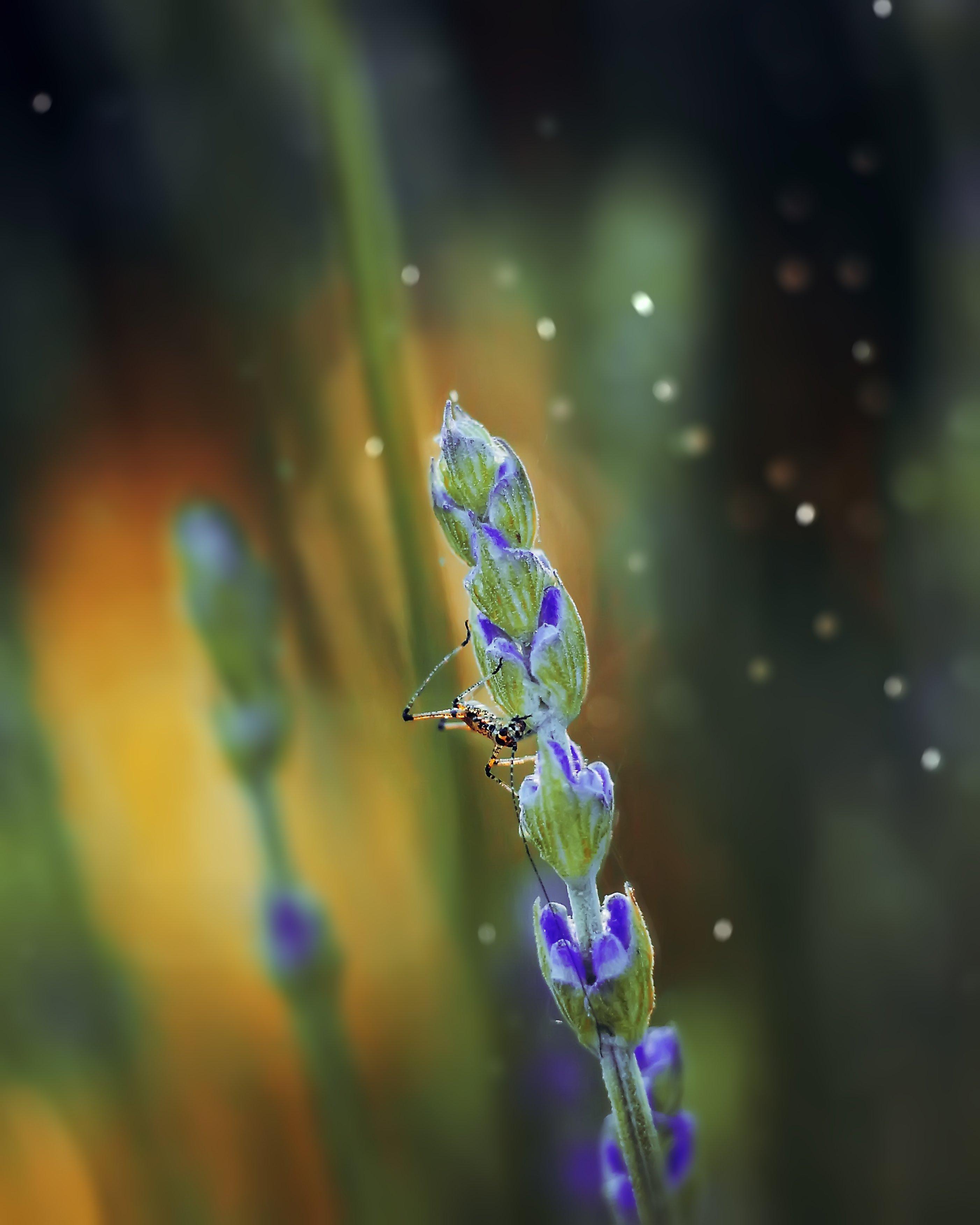 macro bokeh insect helios44-2 helios nature, Анастасия Колесникова