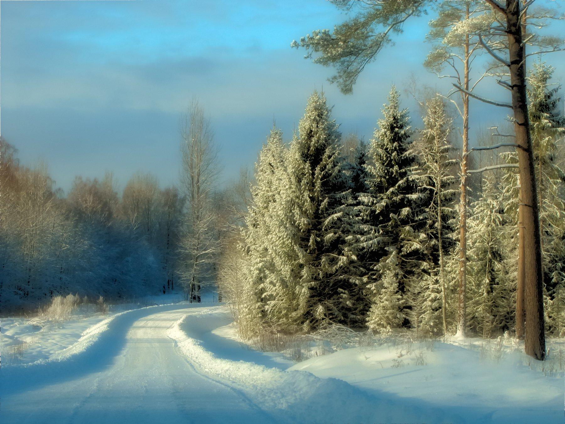 winter, day, foret, road, snow, spruces, trees, sun, blue, beautiful, , Dzintra Regina  Jansone