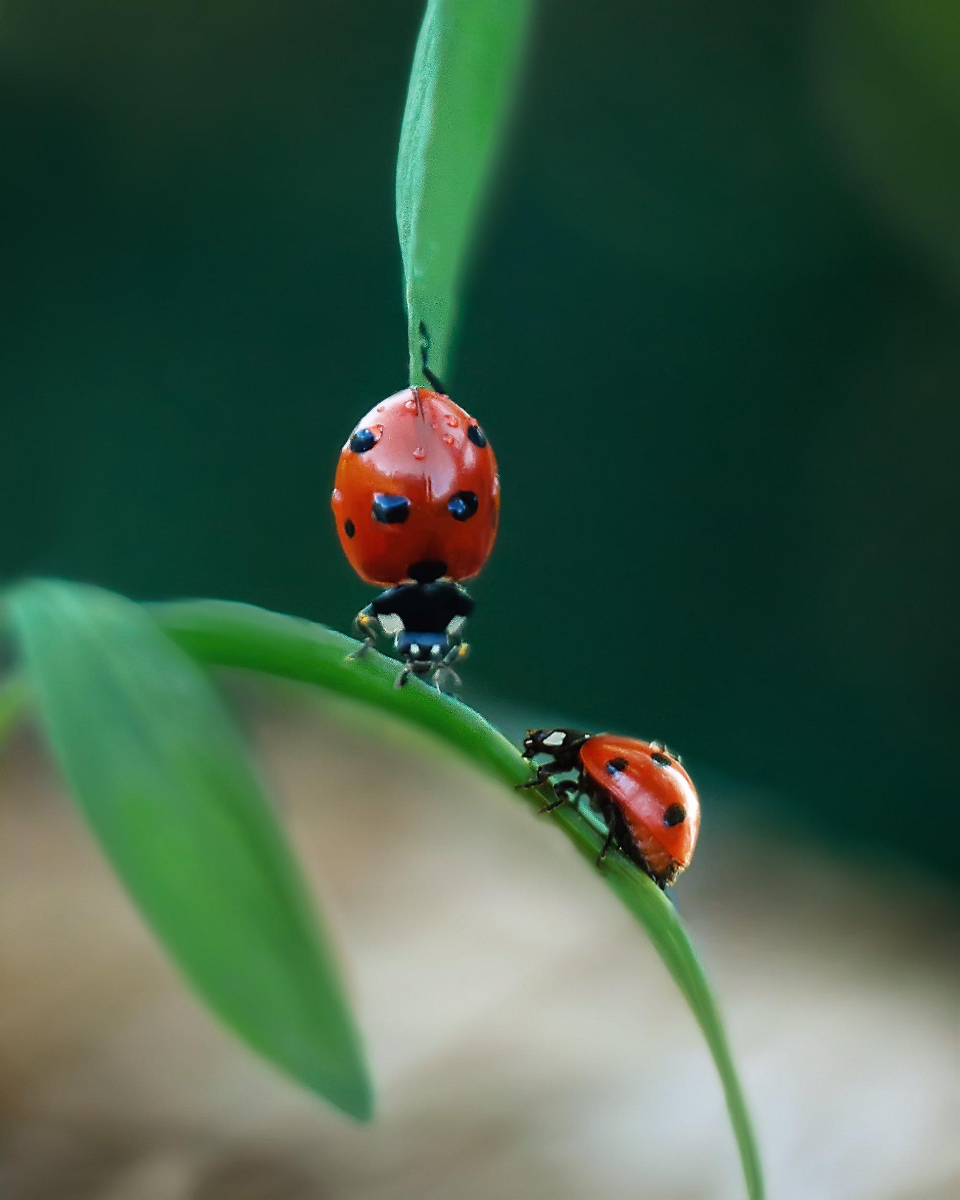 macro insects helios44-2 nature, Анастасия Колесникова