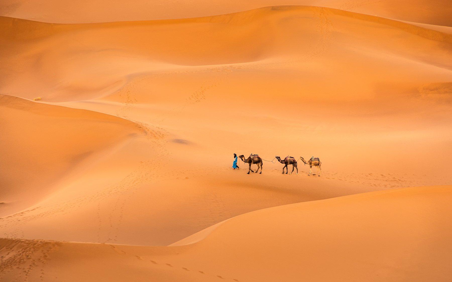 Sahara, Maroc, Camels, Sand, Prybinski