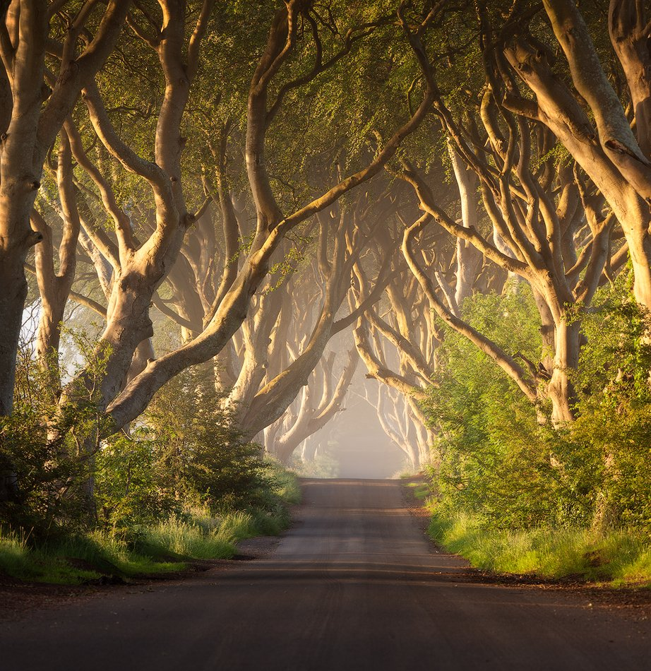 northern, ireland, dark hedges, Alex Yurko