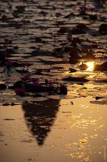 Анкор-ват, отражается в пруду