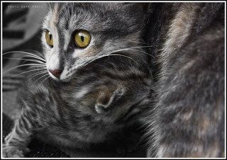 Кошка Загрызка и ее отпрыск