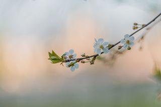 Цветущий май.