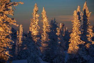 Золотой краской закат раскрасил деревья! Шаг влево и шаг вправо менял светообразы вокруг...