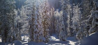 Солнечный свет в морозном лесу всегда \