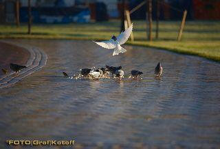 Теперь птицы - главные посетители парка...