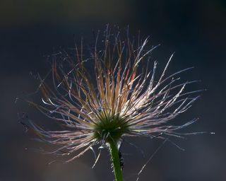 03  Жаль и это счастье длится у Сон-травы недолго...