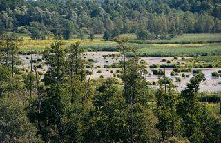 01 Низинные болота и черноольшанник Смоленской географической провинции, находящейся на крайнем западе Московской области