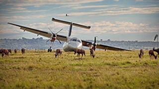 Во время посадки на поле оказалось стадо антилоп. Безвозвратно потерпевшие: шасси, винт, антилопа.