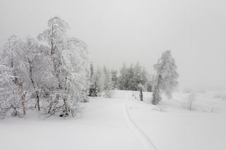 01 На вершине горы Зелёной царили облачности и метель, но чуть ниже по склону ветер стихал и начиналось ажурное царство зимних узоров ...