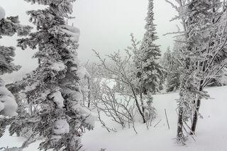 01 После снегопада кустики рябины на склонах неожиданно превращаются из  неприметных Золушек в настоящих принцесс снежного бала, ...