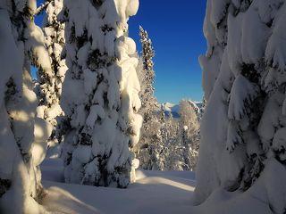 Снежные богатыри.