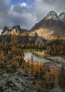 Лиственницы в своем обычном осеннем наряде. Плато Опабин в парке Йохо скрывает в себе несколько небольших озер, речушек, кптпрые потом впадают красивейшее озеро Канадских Скалистых гор - озеро О\'Хара.