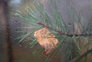 Осень за окном!