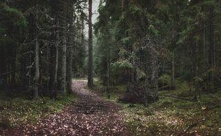 Лесными дорожками. . .