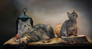 Это только предполагается, что когда будут сниматься котики, то там будет выглядывать тыква. а там светодиодный фонарик. При съемках котиках где и что будет видно - решают котики - и только они!