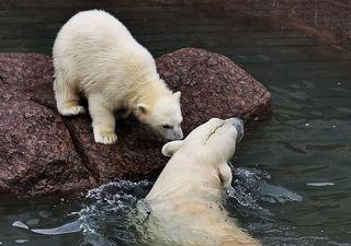 Ну так давай, сынок, учиться плавать...