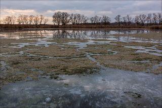 Водоросли на поверхности льда