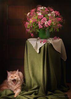 С цветами и котом 2