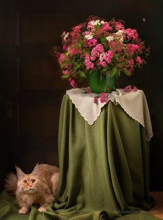 С цветами и котом 3