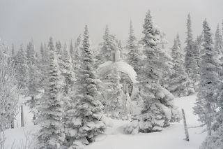 02 И пейзажи горы Зеленой сразу стали серебристо-лаконичными...