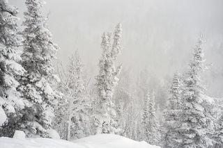 01 Во время нашей декабрьской поездки в Шерегеш почти все пейзажи горы Зеленой, за редким исключением, оказались морозно-туманно-метельными