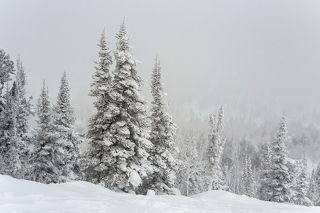 03 ... поскольку снежные фактуры на деревьях не только не тают, а, наоборот, обрастают новыми подробностями