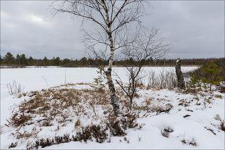 Зимний день на торфяных прудах