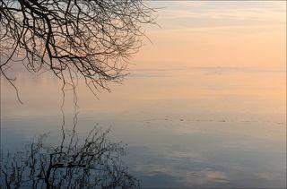 Чайки на тонком льду
