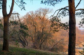 Цвет весенних лишайников в утреннем солнце