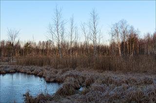 Торфяное болото в тусклом свете восхода
