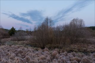 Подмороженный рассвет на заболоченных лугах