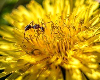 За нектаром весны