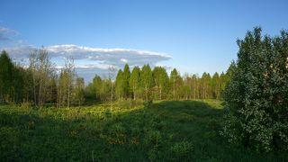 1. Огоньковые поляны за забором нашего участка каждый год радуют наши глаза...