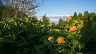 2. Весенний цвет в ясную погоду.