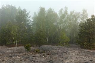 Где-то за лесом, в тумане начинается восход.