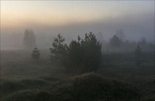 Рассвет. Туман начинает расти.