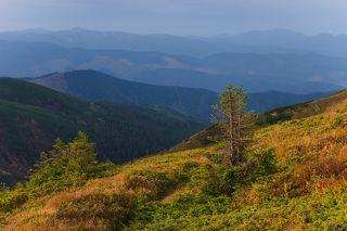 Осенние краски.  Слева на горизонте Румынские Карпаты и гора Фаркеу, справа видно Мармаросы.