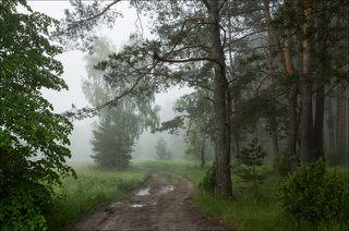 Туманное утро у старого соснового леса