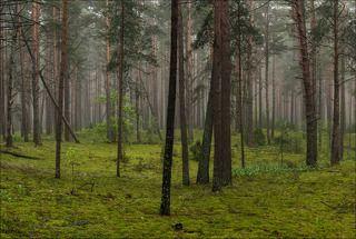 Волшебный цвет туманного леса в начале июня
