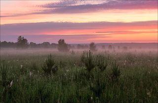 Красочный восход с молодыми сосенками