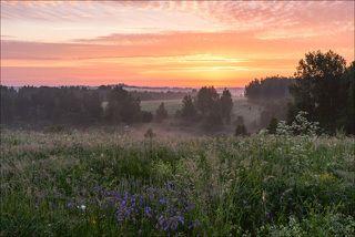 Рыжий восход над цветущими лугами
