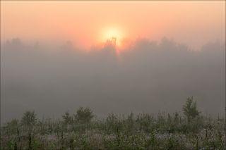 Восход за туманным перелеском