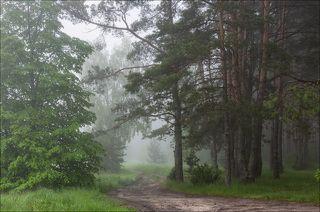 Дорога вдоль леса туманным утром
