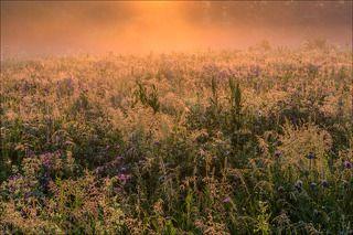 Цветущий луг в лучах восхода
