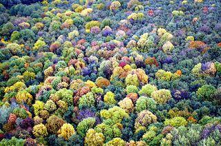 Борщёвский лес