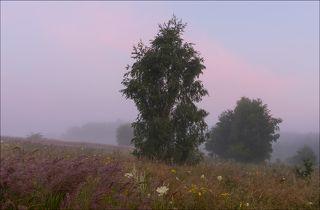 Утренняя зорька в полях