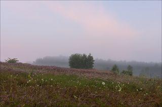 Июльское утро на бывшем поле