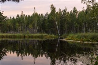 За лесом начинается закат